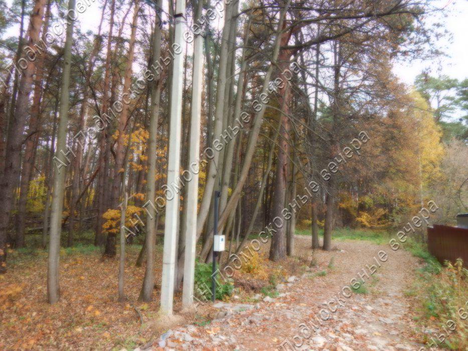 Участок: село Ильинское (фото 5)