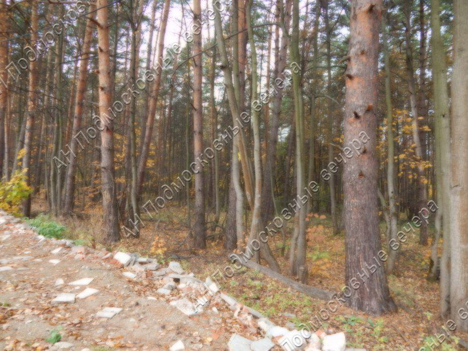 Участок: село Ильинское (фото 6)