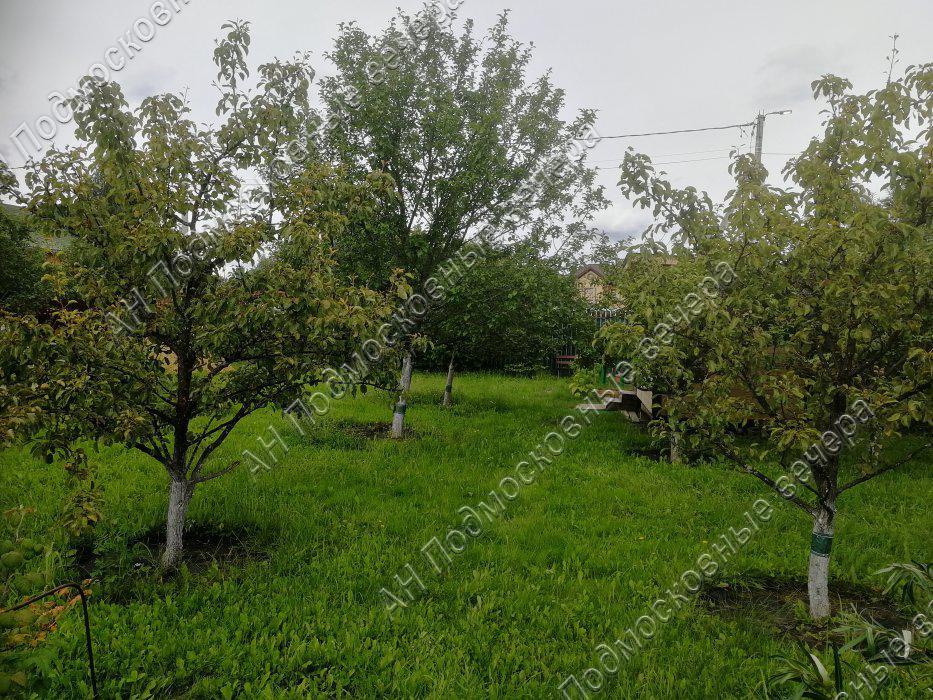 Участок: село Дмитровское (фото 8)
