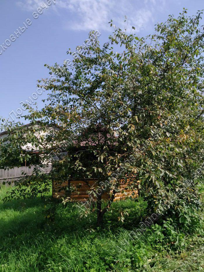Участок: село Внуково (фото 2)